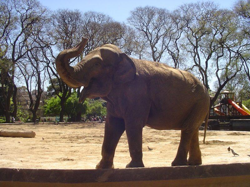Elefante no Zoo de Buenos Aires: decisão polêmica sobre o parque. / Foto: Rogério Borges
