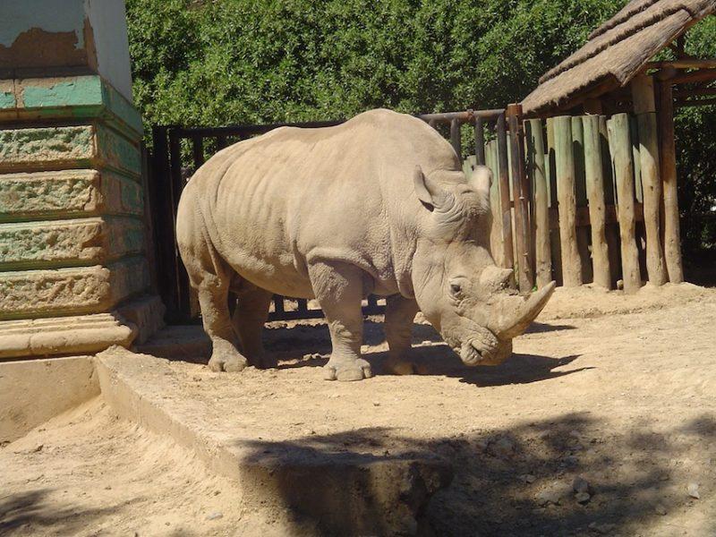 Grandes mamíferos do Zoo de Buenos Aires, como rinocerontes, serão realocados. / Foto: Rogério Borges