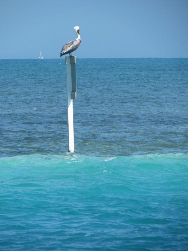 Mar cristalino de Caye Caulker: águas irresistíveis. / Foto: Rogério Borges