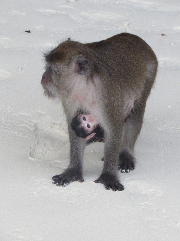 Na Ilha dos Macacos, quem manda são eles. / Foto: Rogério Borges