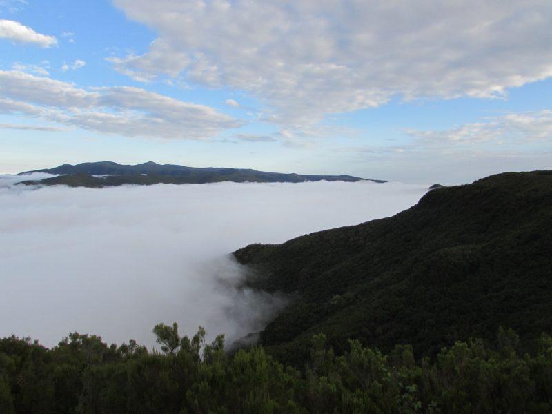 Névoas em altiplano da Madeira: nuvens que mudam a paisagem em instantes. / Foto: Rogério Borges