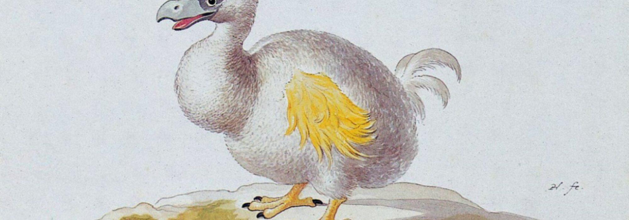 Imagem: Dodô Branco (Pieter Holsteyn, 1638)